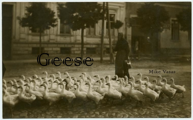 hint7-geese